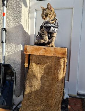 Katze Fibi sitzt auf der Holzbox, die die Katzenklappe vor Frost schützen soll