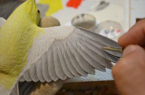 翼の裏を塗る