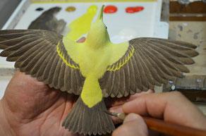 翼にグラデーションをつけて塗る