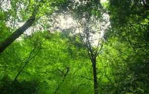 御蔵島ドルフィンスイム:森ツアー