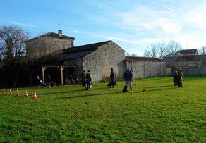 Groupe de chiens en education canine collective sur le terrain de coach canin 16 éducateur canin cognac et angoulême