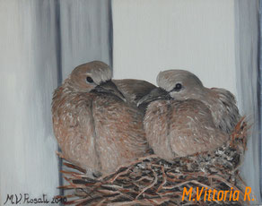 turledoves, oil on canvas, cm 24x30, 2010 collection private