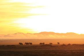 夜明け(ケニア、アンボセリ国立公園) (全紙)