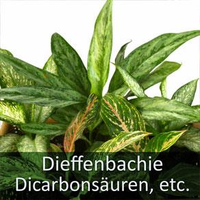 Wir als Kleintierpraxis Dr. Birge Herkt haben sehr häufig mit Theobrominvergiftung zu tun! Passen Sie bitte auf Ihr Tier auf!