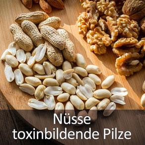 Ihr Tierarzt Dr. Birge Herkt rät: bitte keine Nüsse an Ihren Liebling verfüttern!
