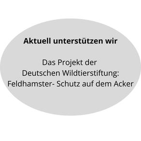 Link zu: Aktuelle Unterstützung für das Projekt der Deutschen Wildtier Stiftung: Feldhamster- Schutz auf dem Acker