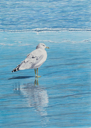 "Acrylic painting of ocean seagull reflecting on beach - ""Reflecting"""