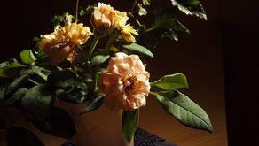 真の日本料理「美菜ガルテンふるかわ」庭に咲いたバフビューティ