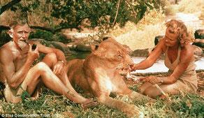 George e Joy Adamson con Elsa, la leonessa.