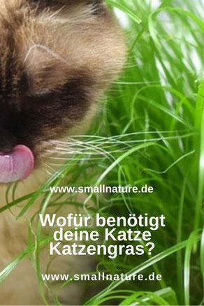 Wofür benötigt deine Katze Katzengras?