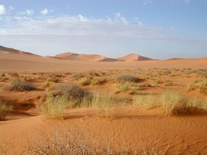 El clima español se asemejará al del norte de África según el informe Cambio climático en Europa 1950-2050. Percepción e impactos. / Wikipedia