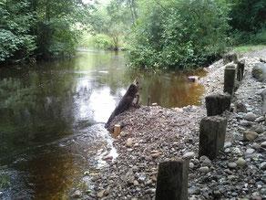 Kies und Baumwurzeln schützen nun das Ufer vor Erosion