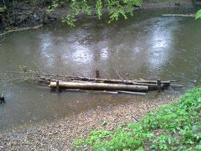 Eingebautes Totholz am Haselknick