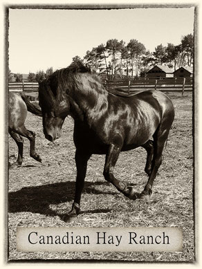 Stallion: Cherry Creek Fonzie REVELSTOKE