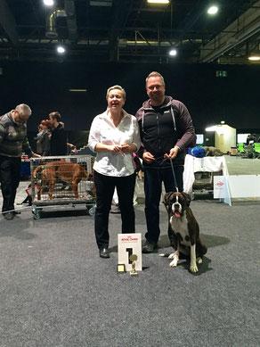 Offenburg Hartmann Boxer Hund vonderwaldnielerheide Ausstellung