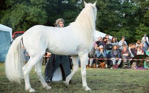 Jihal Körung 1994