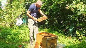 Petro Held mein Honiglieferant vom Lorberg