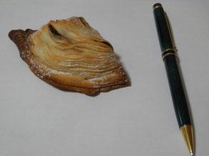 スフォリアテッラというリンゴとカスタードのパイです。