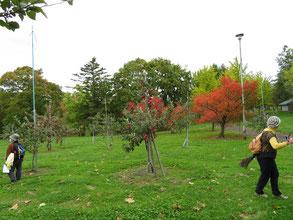 リンゴも真っ赤に熟しています。