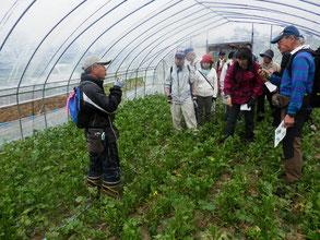 高橋さんから菜花の栽培について説明していただきました。