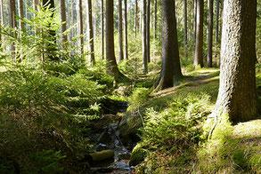 Bach nahe Stausee in Dresdner Heide. Waldbaden und Entspannung in Natur.