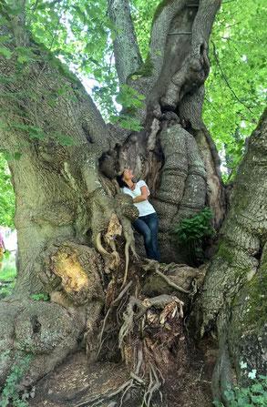 Natur erleben in Bayern: Tassilo-Linde in Wessobrunn