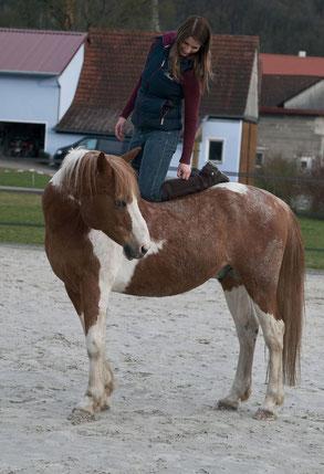 Angstreiter gelassenes Pferd Problempferd