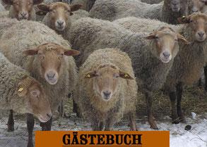Coburger Fuchsschafe
