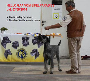 Best Baby Saarbrücken 2014, J CH ISPU, J CH LUXEMBURG,  J CH GERMANY,  PSK Jahresjugendsieger 2015,  KLUB JUGENDSIEGER (J CLUB CH),  8 JCAC, CAC, 5 BOB, many V1, HDA2, ED0.