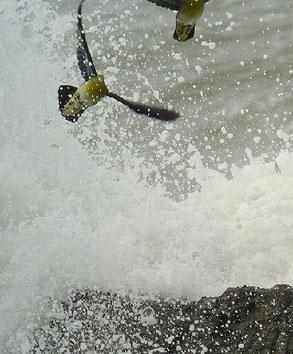 ・2007年7月16日 大磯海岸