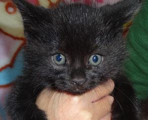 黒 子猫一匹目