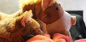Léo le chat et son compagnon Jéricho qui bullent ensemble pendant que Cloé Perrotin de l'entreprise Illustr'&Vous travaille