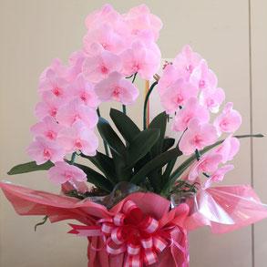 開業・開店・開院御祝いプリザーブドフラワー胡蝶蘭鉢物