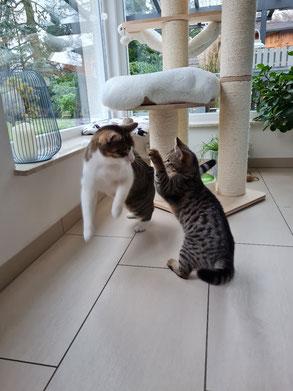 Catzilla und MUTO in Aktion