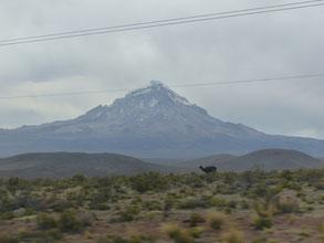 De loin, on aperçoit déjà le Nevado Sajama!