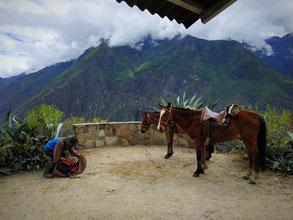 Les mules qu'on aura de cesse de croiser pendant ce trek