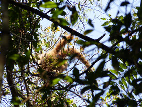 On a aperçu un gibbon