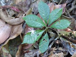 Une petite araignée blanche