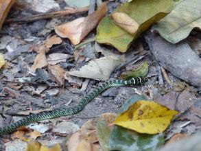 Nous avons vu un serpent...mort