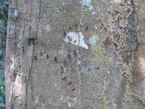 Des traces de griffes d'ours