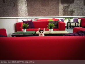 cat-cafe-gorazdova-praga