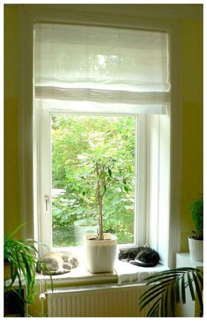 Fensterplatz Schlafplatz Fenster für zwei Katzen Trennung einrichten gestalten Idee