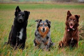 Unsere Einstehohr-Hunde!