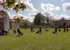 Un groupe de maîtres et leur chien en séance éducation canine chez coach canin 16 education canine charente