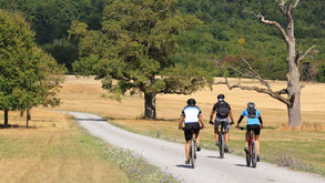 Drei Mountainbiker fahren auf Feldweg