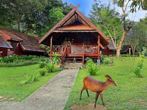 Mutiara resort in de Taman Negara in West-Maleisië
