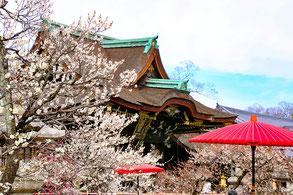 1月25日は初天神。梅もちらほら咲き始めます