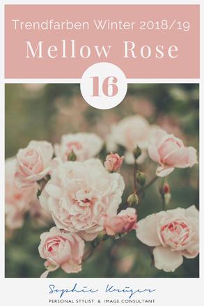 Mellow Rose - kühler Rosaton für den Sommertyp