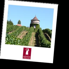 Château Terre Vieille - Vignoble de Bergerac en Dordogne - Périgord