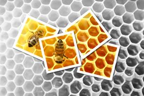 vente de ruche warrée